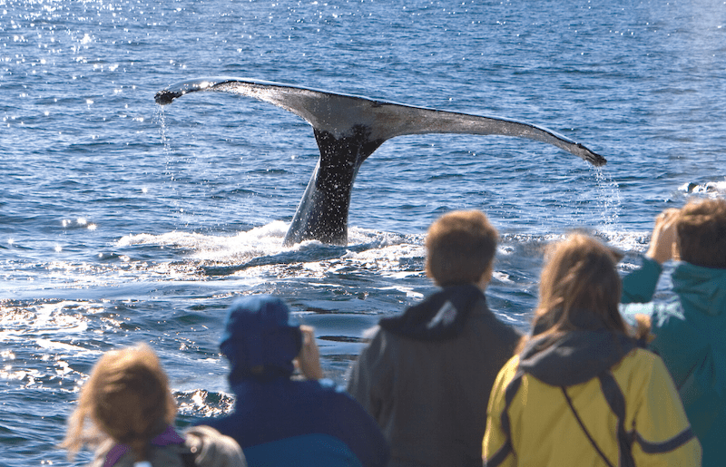The 10 Best Whale Watching Spots in the World